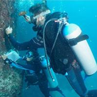 Contendo a invasão: a eficácia do manejo dos corais-sol no Arquipélago dos Alcatrazes
