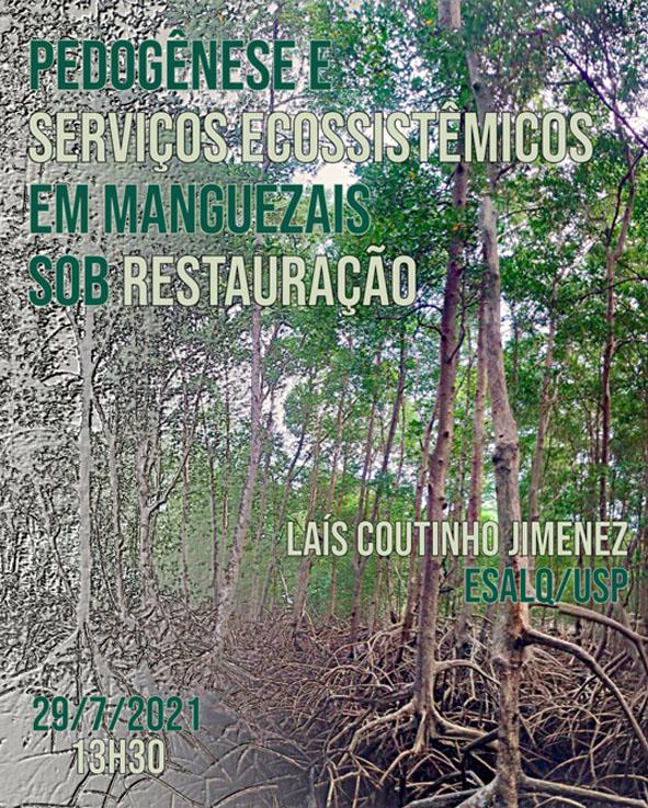Pedogênese e serviços ecossistêmicos em manguezais sob restauração