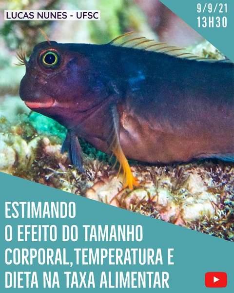 CEBIMário: Estimando o efeito do tamanho corporal, temperatura e dieta na taxa alimentar dos animais