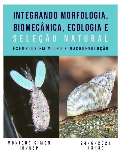 CEBIMário: 'Integrando morfologia, biomecânica, ecologia e seleção natural: Exemplos em micro e macroevolução