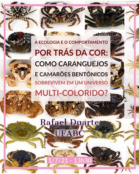 CEBIMário: A ecologia e o comportamento por trás da cor. Como caranguejos e camarões bentônicos sobrevivem em um universo multi-colorido?
